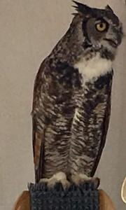 literary owl